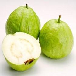 Guava (Amrood )